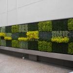 Good Earth Plant Co - Jim Mumford - Jefferson Law