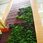 Parker Interior Plantscapes, Inc._Tom Walsh_12_Pic2