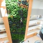 Parker Interior Plantscapes, Inc._Tom Walsh_12_Pic6