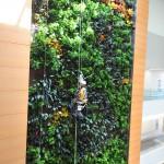 Parker Interior Plantscapes, Inc._Tom Walsh_12_Pic8