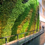 Plant Connection, Inc. - NY_13_23 Story Atrium Living Wall_Pic5