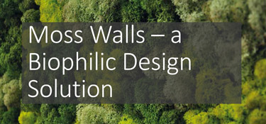 Moss Walls - Biophilic Design Solution