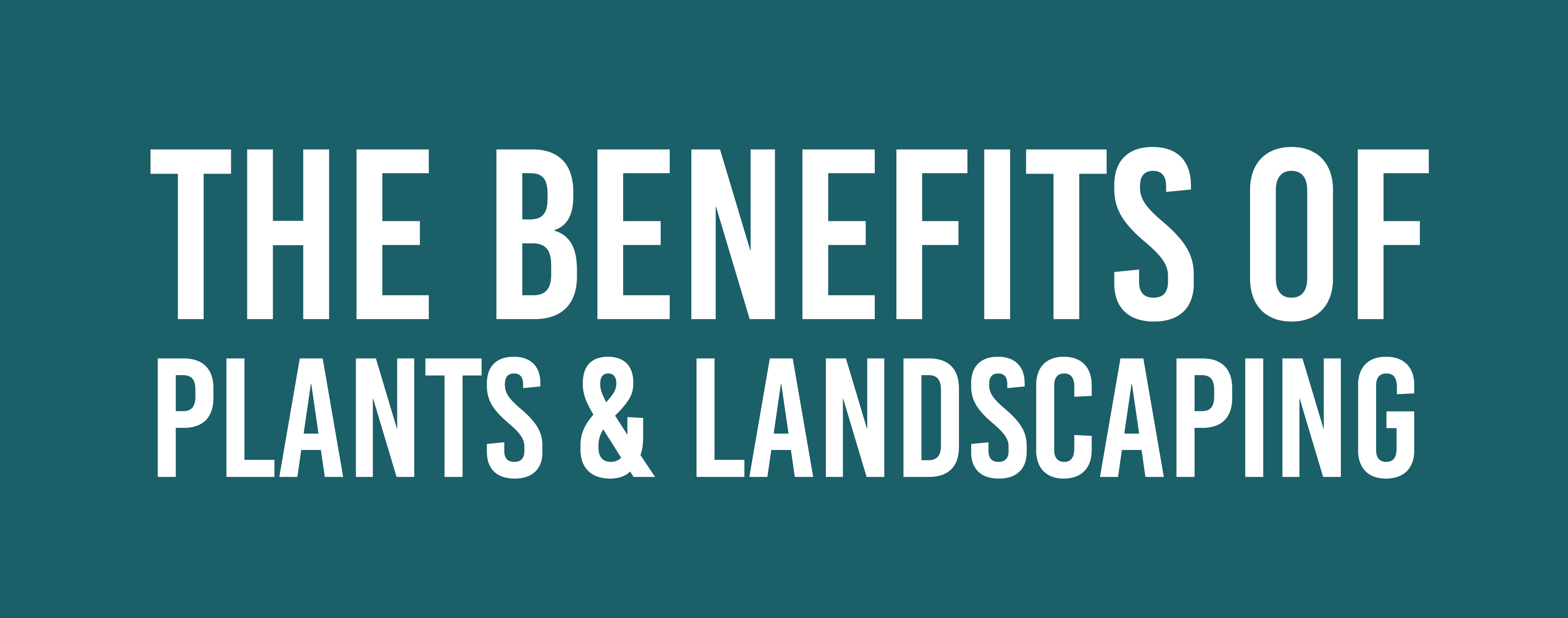 Benefits of Plants and Landscaping