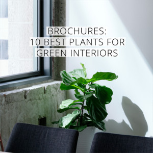 10 best plants for green interiors