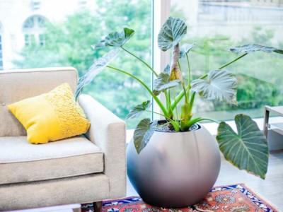 fiberglass globe plant container