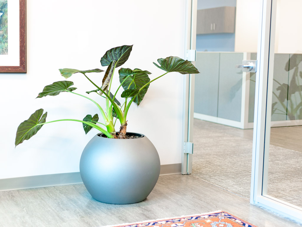 fiberglass planters indoors